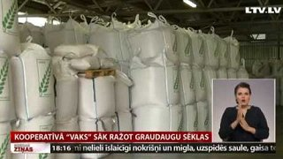 Kooperatīvā «VAKS» sāk ražot graudaugu sēklas