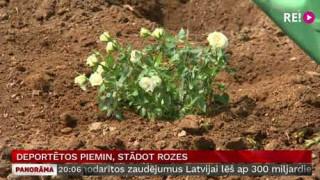 Deportētos piemin, stādot rozes